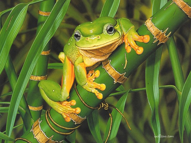1_Cal_2006_00_EgoGuiotto_FriendlyFrog