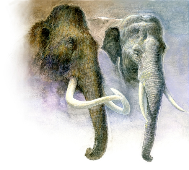 Painting comparison of a woolly mammoth and an Asian elephant.